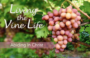 Living the vine life web.001