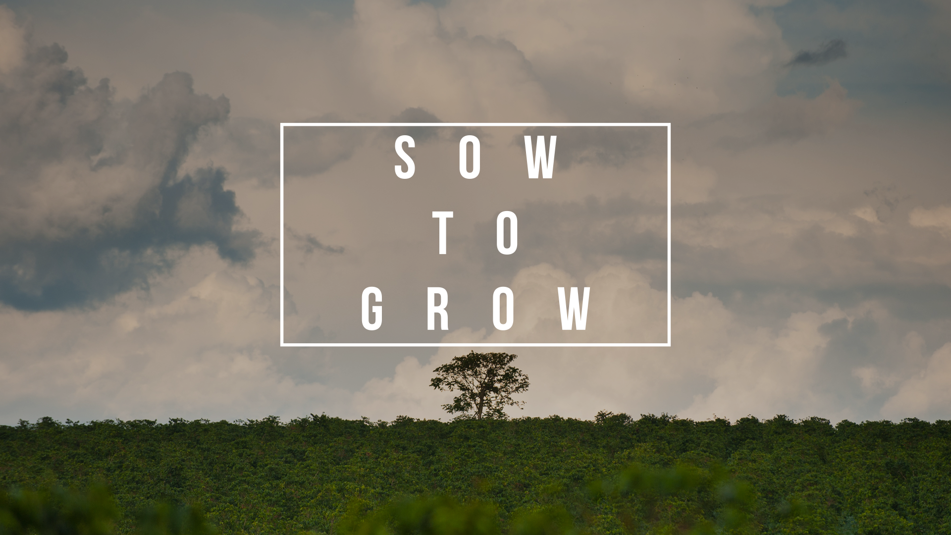Sow to grow 3