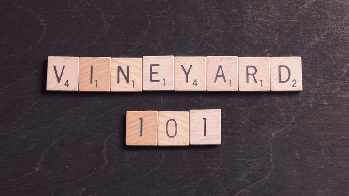Vineyard 101 logo image