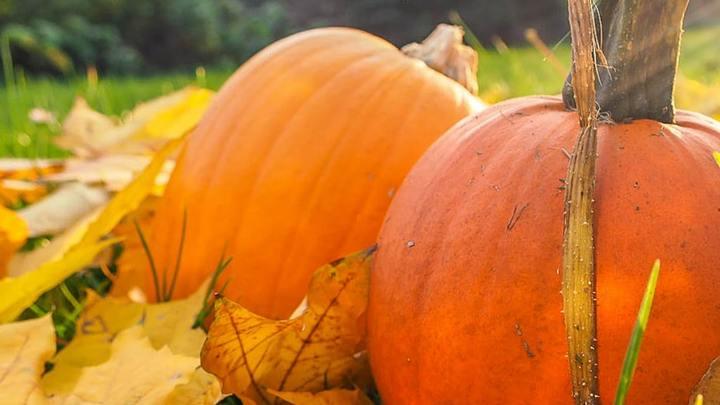 Autumn on the Square logo image