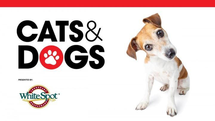 Westside @ Science World After Dark: Cats & Dogs logo image