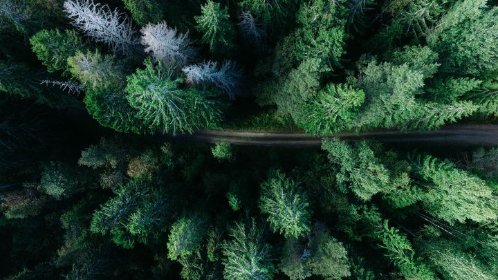 Pneuma Outdoors Hike - 3 Sisters Creek logo image