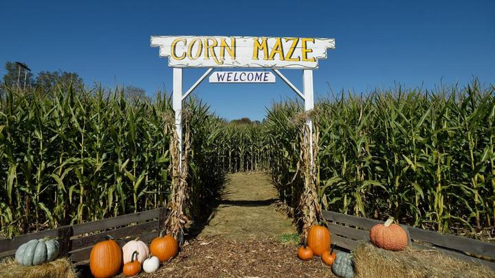 College & Young Adults @ Scott's Corn Maze logo image