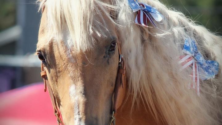 Horse Back Riding -FREE logo image