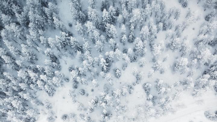 Snow Trip logo image