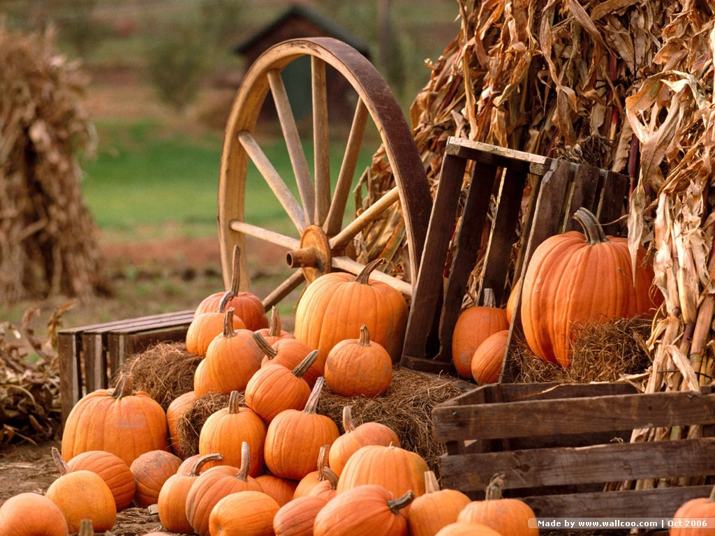 0pumpkin pumpkins 0autumn harvest